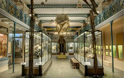 Braderie de Lille : au Musée d'histoire naturelle de Lille